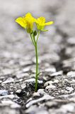 flower-growing-crack-asphalt-6515384